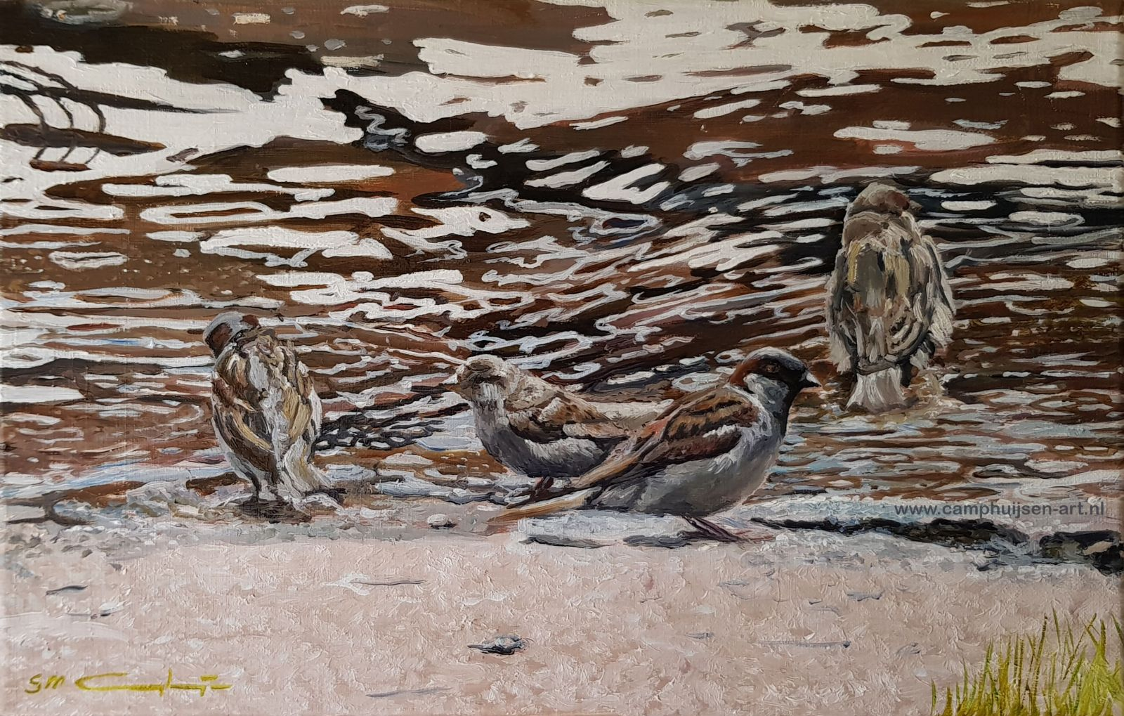 badderende mussen, bathing sparrows